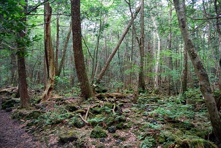 Aokigahara-Jukai.nanoda.com